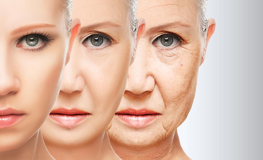 ケルセチン 抗酸化作用 老化防止